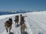 Glacier3000_Huskys-©Gstaad-Saanenland-Tourismus(2)